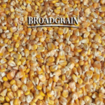 Зерно, кукуруза, горох FOB порт - купим на экспорт.