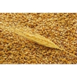 Экспорт пшеницы CIF порты: Египет, Греция, Турция, Тунис, Йемен, ОАЭ и т.д.