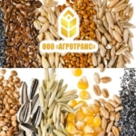 ООО «Агротранс» осуществляет перевалку зерновых, бобовых и технических культур из автотранспорта в морские 20 и 40 фут контейнера.