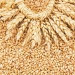 Закупаем пшеницу продовольственную и фуражную, от 5000 тонн, на условиях FOB порты Чёрного моря и Каспийского или CIF порты Ирана, Египта, Турции.