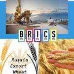 Зерно в порту Новороссийск / Grain in port Novorossiysk