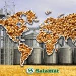 Интересует транспортировка муки пшеничной в 20, 40 -футовых контейнерах в порт Бенин-Котону и Шри-Ланки, Коломбо.