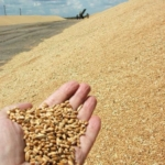 Экспорт пшеницы 3 класса мягких сортов из Ростова-на-Дону.